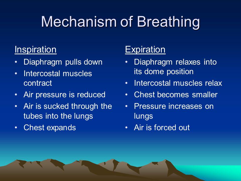 Composition of Air Inhaled 79% = Nitrogen 20% = Oxygen Trace = Carbon Dioxide Exhaled 79% = Nitrogen 16% = Oxygen 4% = Carbon dioxide