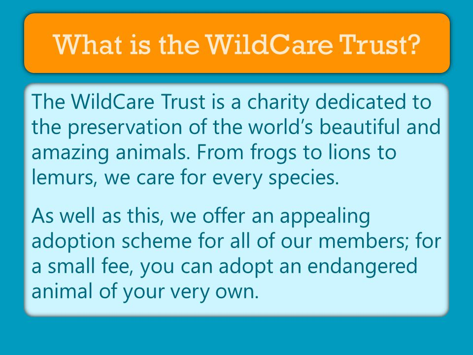 About Us What is the WildCare Trust.