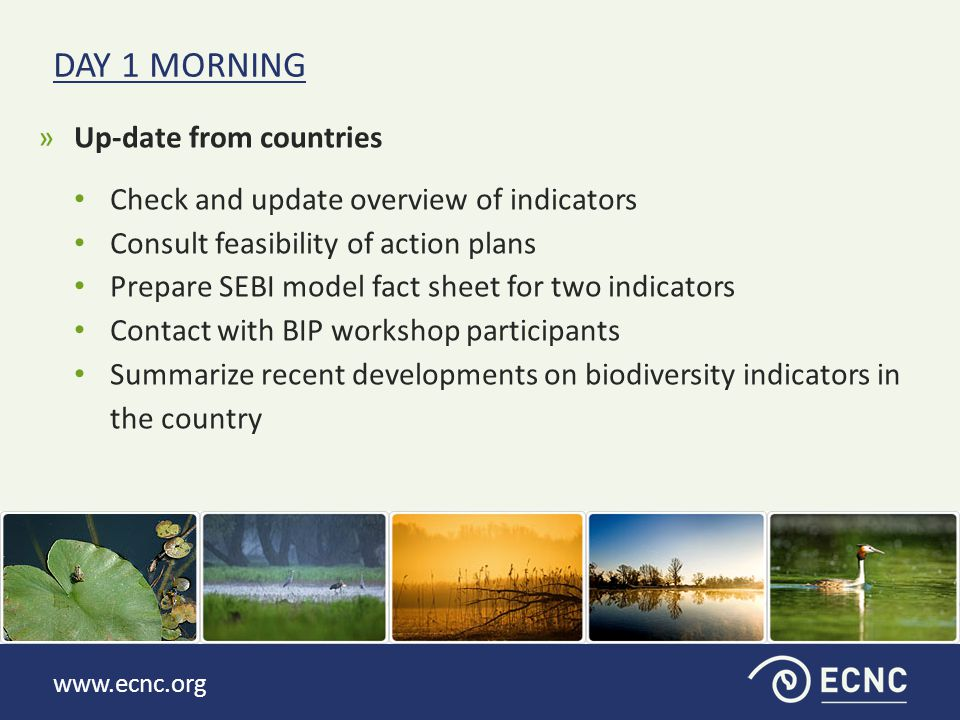 www.ecnc.org »Up-date from countries Check and update overview of indicators Consult feasibility of action plans Prepare SEBI model fact sheet for two