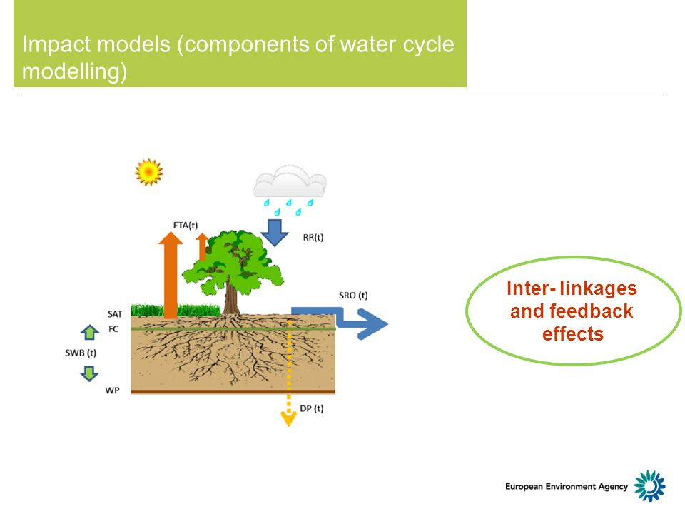 Impact models (components of water cycle modelling) Inter- linkages and feedback effects