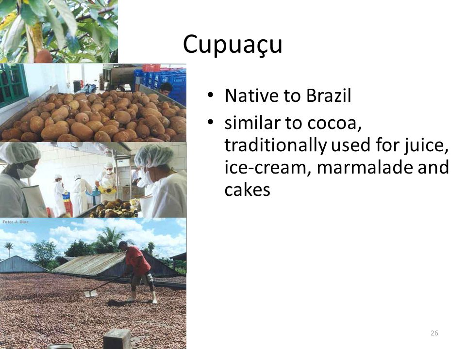 26 Cupuaçu Native to Brazil similar to cocoa, traditionally used for juice, ice-cream, marmalade and cakes