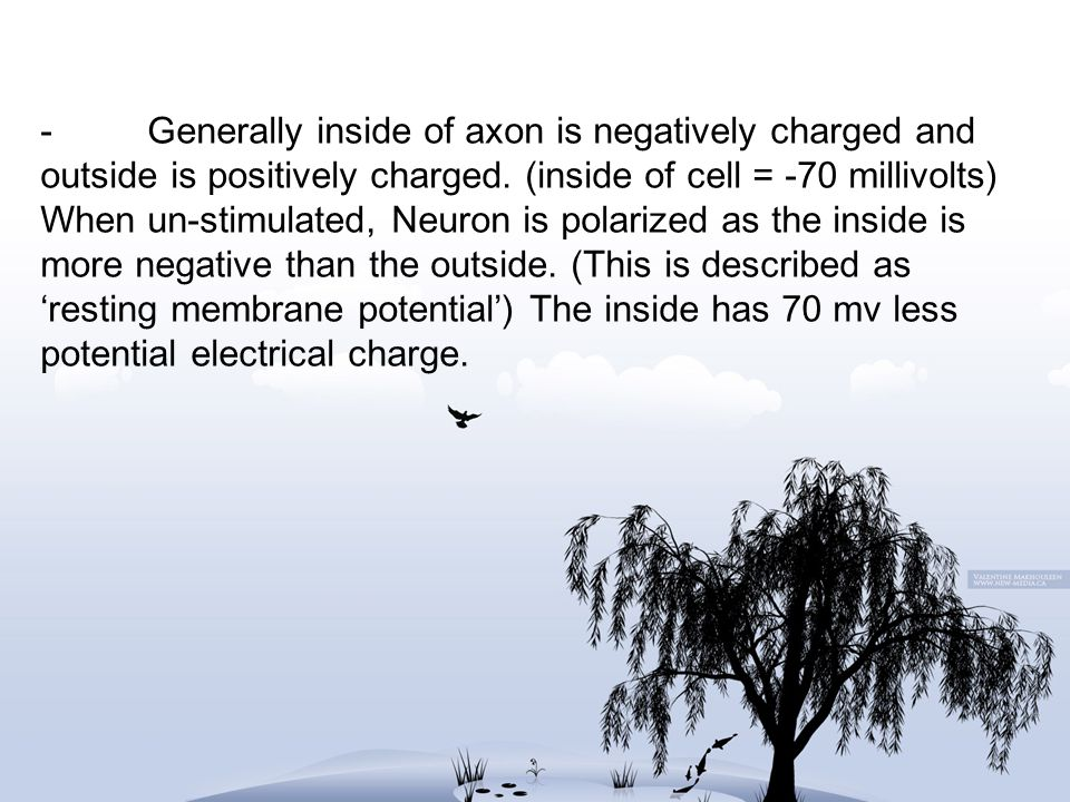 -Generally inside of axon is negatively charged and outside is positively charged.