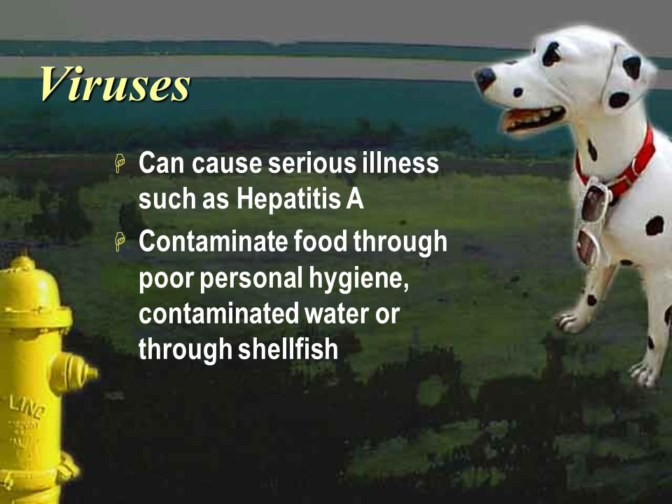 VirusesViruses H Can cause serious illness such as Hepatitis A H Contaminate food through poor personal hygiene, contaminated water or through shellfi