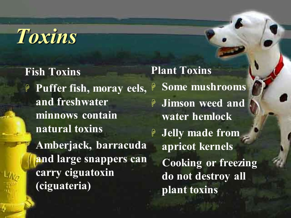 ToxinsToxins Fish Toxins H Puffer fish, moray eels, and freshwater minnows contain natural toxins H Amberjack, barracuda and large snappers can carry