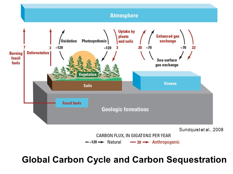 Global Carbon Cycle and Carbon Sequestration Sundquist et al., 2008