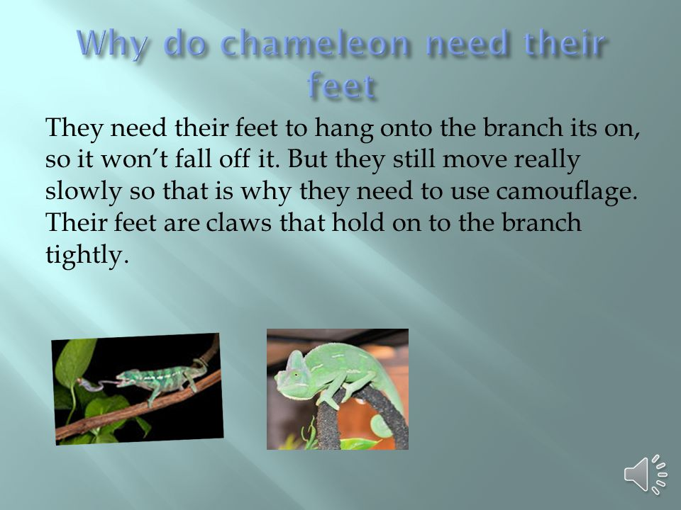 They need their feet to hang onto the branch its on, so it won't fall off it. But they still move really slowly so that is why they need to use camouf