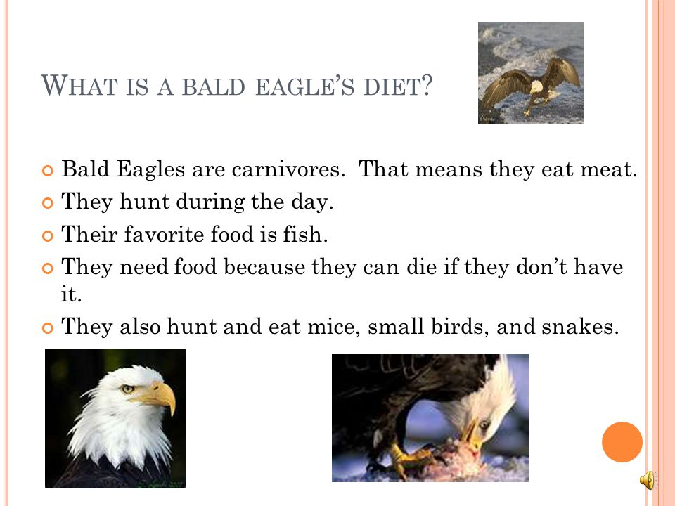 D ANGERS TO THE B ALD E AGLE … Even though they are protected by law, Bald Eagle are shot and killed all the time. Most bad pesticides are not used an