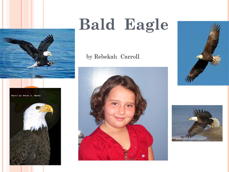 Learning about the Bald Eagle is fun! I hope you leaned lots about the Bald Eagle. It is fun to learn about our nation's symbol. Reference: http://www