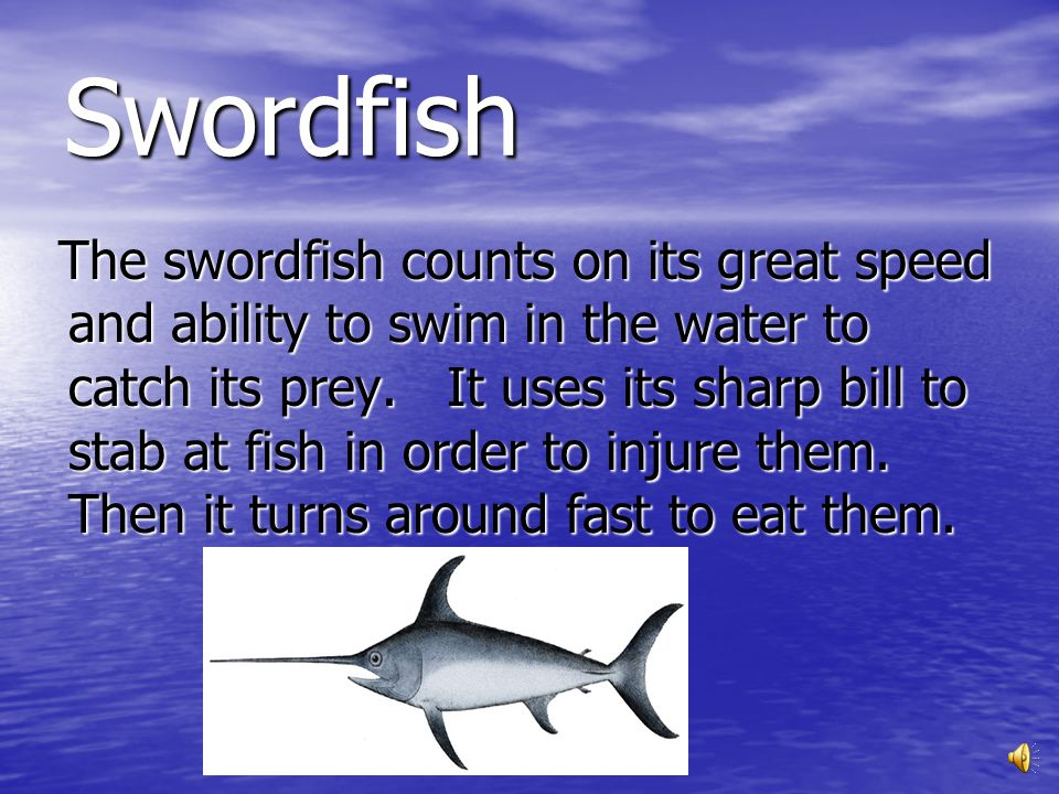 Swordfish The swordfish has a streamlined body. Their body helps them swim fast to get away from orca whales, sperm whales, and large sharks. They als