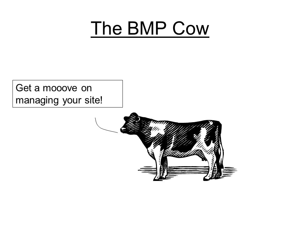 The BMP Cow Get a mooove on managing your site!