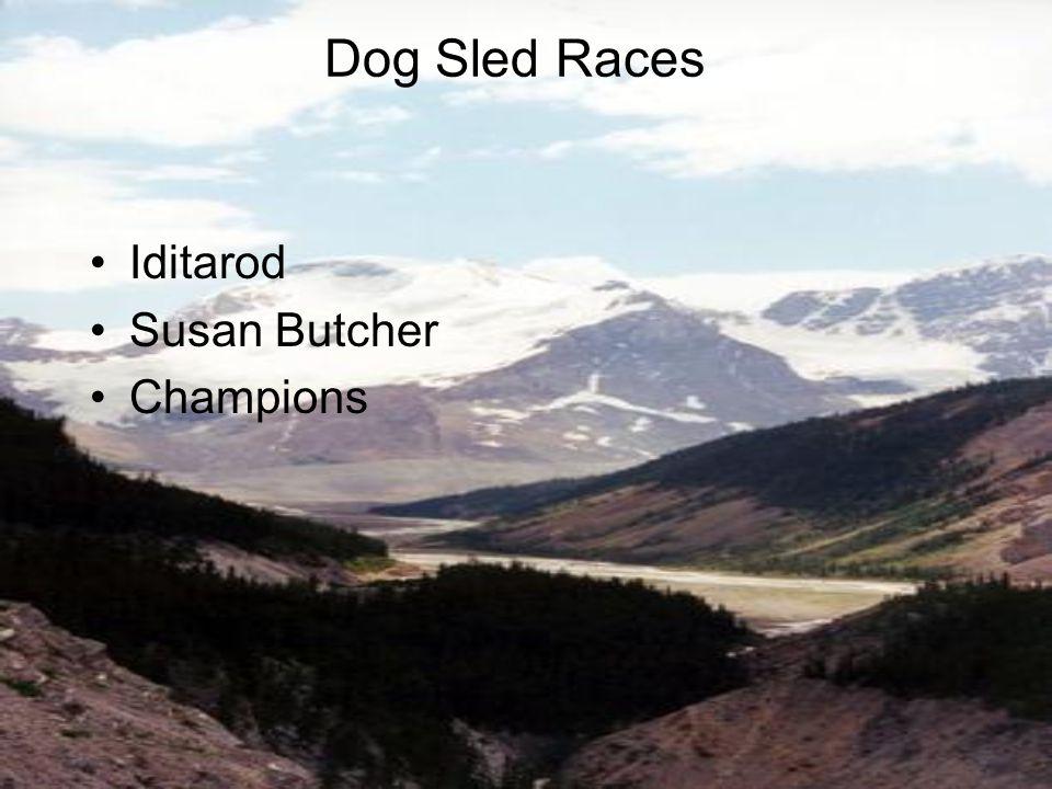 Iditarod Susan Butcher Champions Dog Sled Races