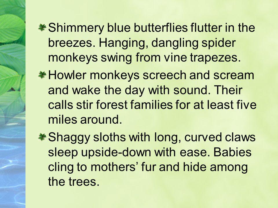 Shimmery blue butterflies flutter in the breezes. Hanging, dangling spider monkeys swing from vine trapezes. Howler monkeys screech and scream and wak