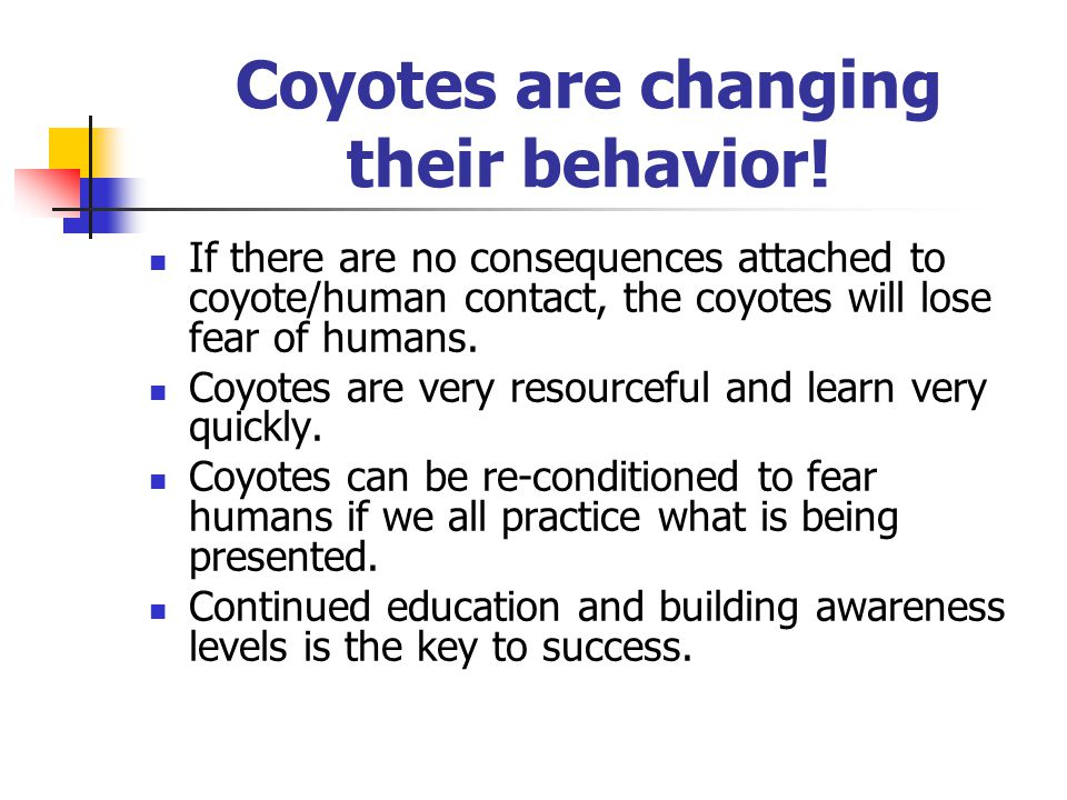 Coyotes are changing their behavior.