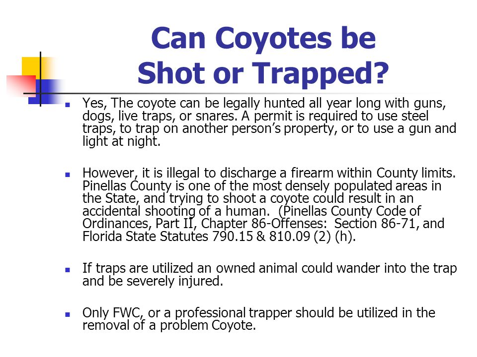 Can Coyotes be Shot or Trapped.