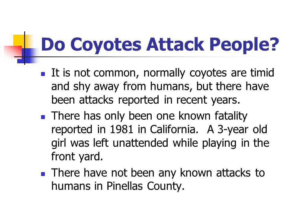 Do Coyotes Attack People.
