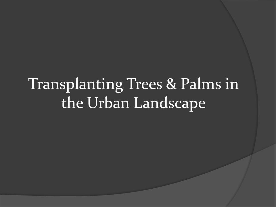 Transplanting Trees & Palms in the Urban Landscape