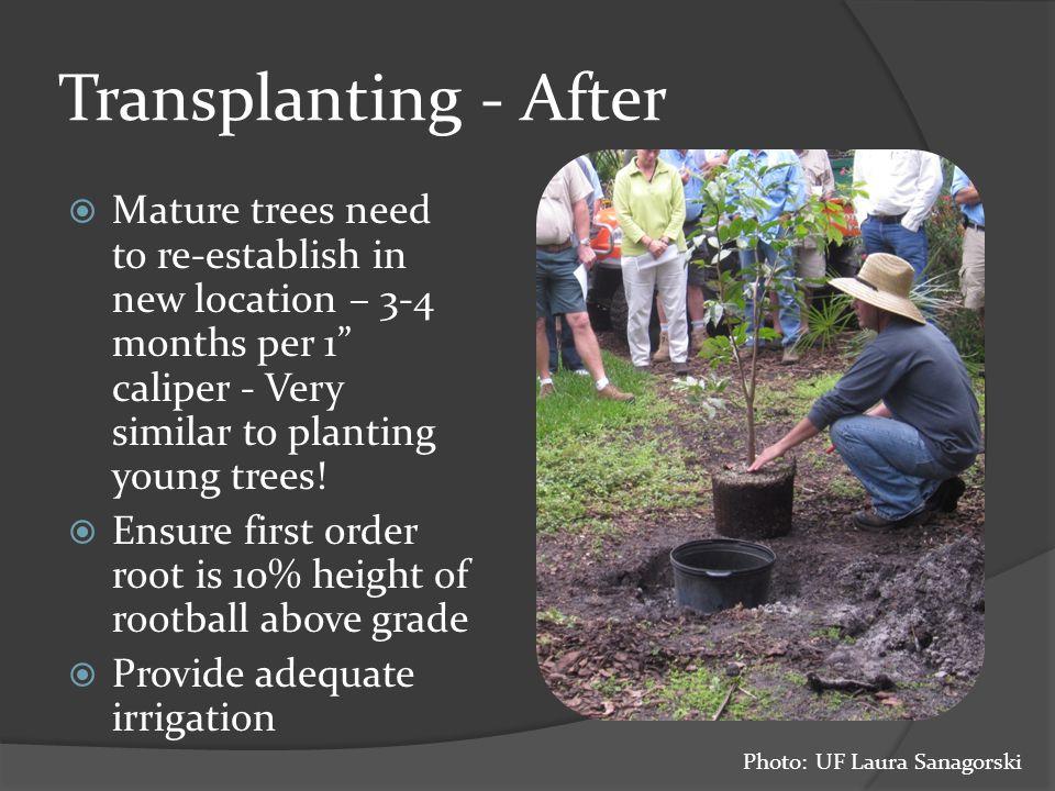 Transplanting Palms