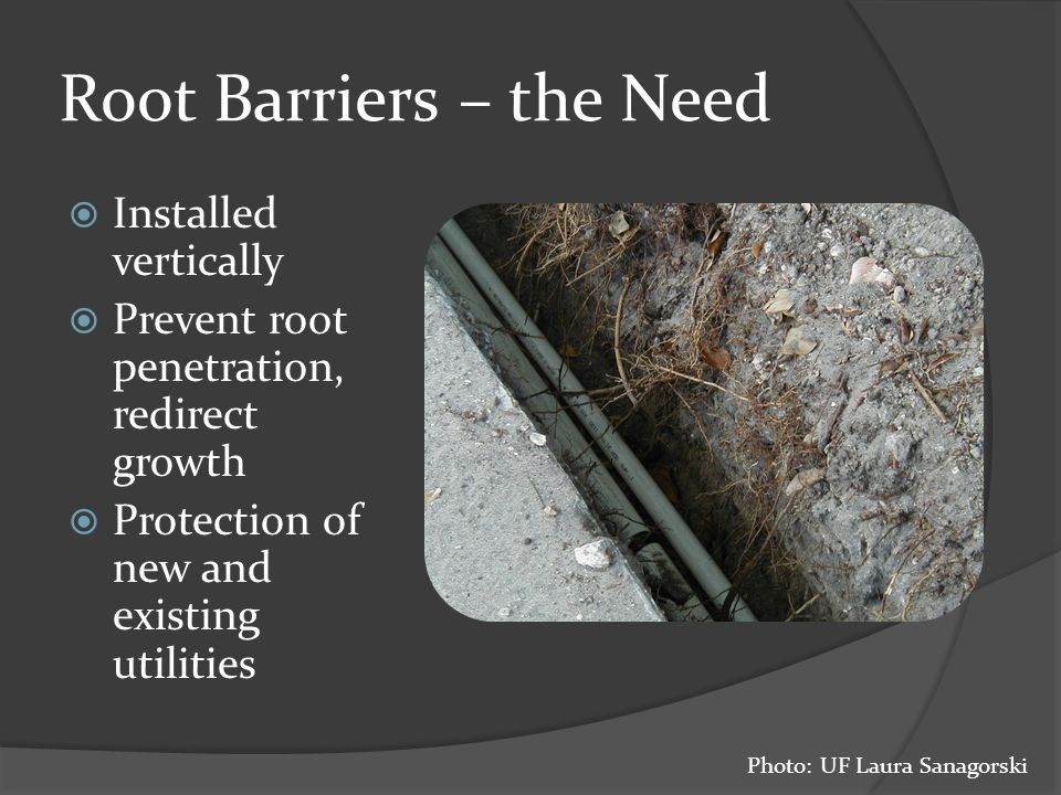 Root Barriers – the Need  Installed vertically  Prevent root penetration, redirect growth  Protection of new and existing utilities Photo: UF Laura Sanagorski