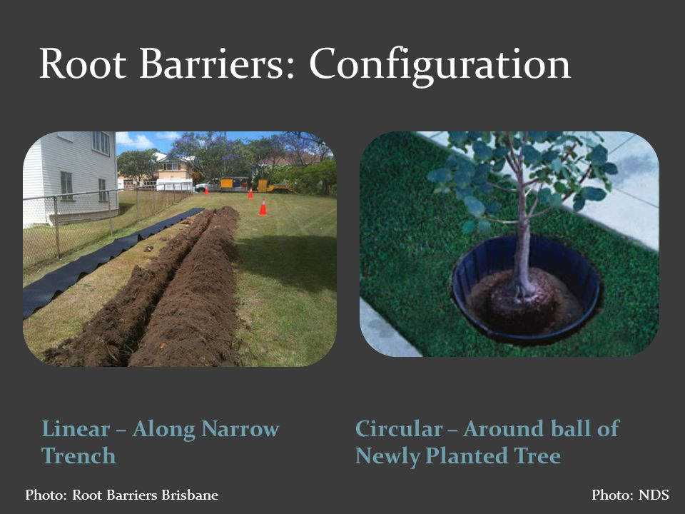 Root Barriers - Design  Vertical ribs – deflect roots downward  Locking wings or tabs  Newer barriers have more rugged tops Photo: NDS