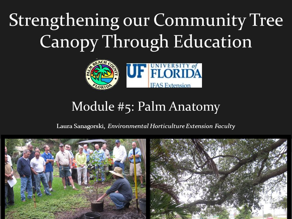 Strengthening our Community Tree Canopy Through Education Module #5: Palm Anatomy Laura Sanagorski, Environmental Horticulture Extension Faculty