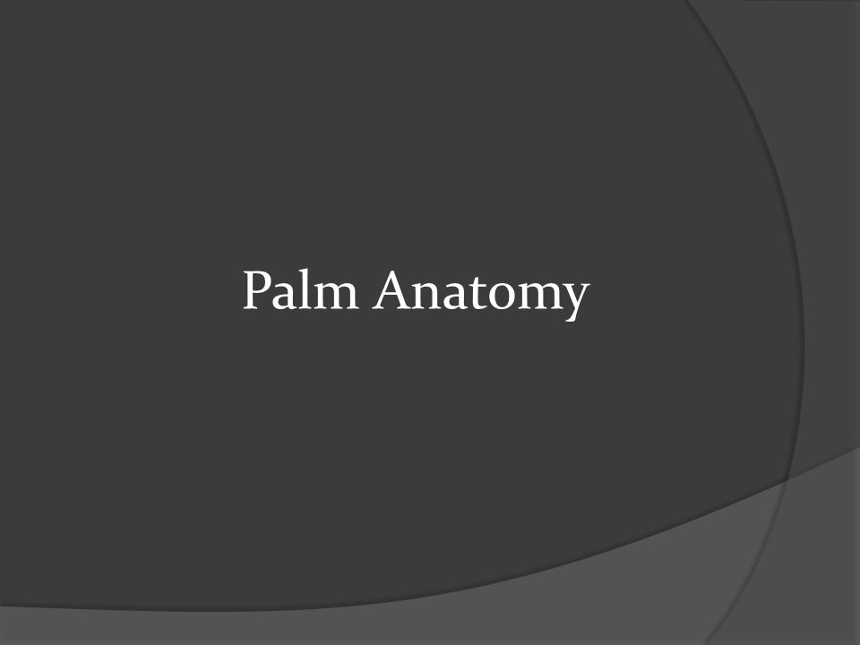Palm Anatomy
