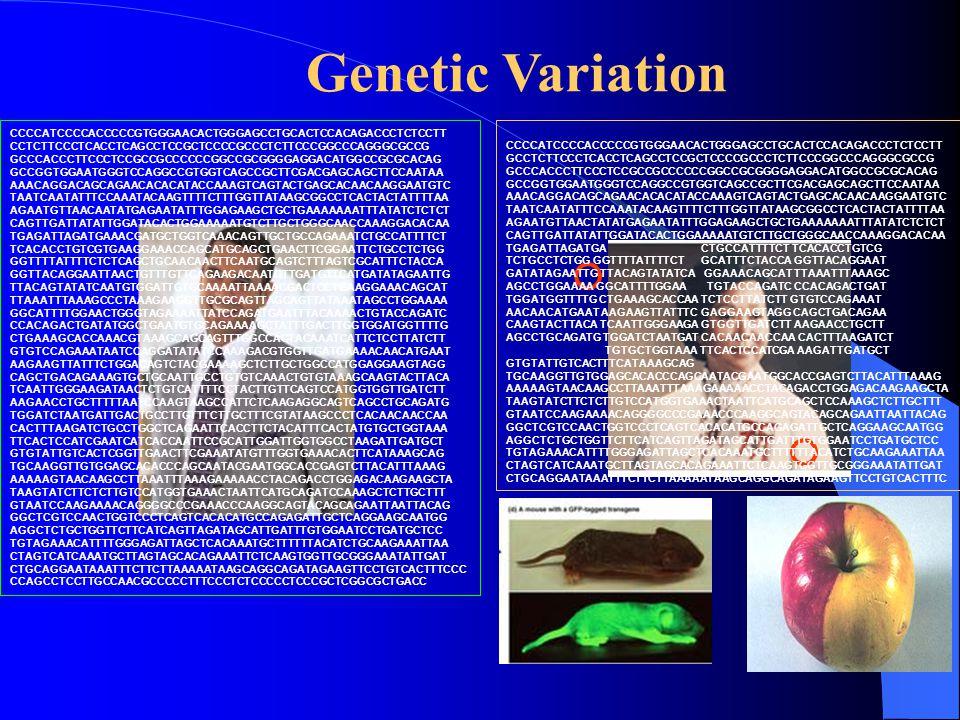 Genetic Variation CCCCATCCCCACCCCCGTGGGAACACTGGGAGCCTGCACTCCACAGACCCTCTCCTT CCTCTTCCCTCACCTCAGCCTCCGCTCCCCGCCCTCTTCCCGGCCCAGGGCGCCG GCCCACCCTTCCCTCCGCCGCCCCCCGGCCGCGGGGAGGACATGGCCGCGCACAG GCCGGTGGAATGGGTCCAGGCCGTGGTCAGCCGCTTCGACGAGCAGCTTCCAATAA AAACAGGACAGCAGAACACACATACCAAAGTCAGTACTGAGCACAACAAGGAATGTC TAATCAATATTTCCAAATACAAGTTTTCTTTGGTTATAAGCGGCCTCACTACTATTTTAA AGAATGTTAACAATATGAGAATATTTGGAGAAGCTGCTGAAAAAAATTTATATCTCTCT CAGTTGATTATATTGGATACACTGGAAAAATGTCTTGCTGGGCAACCAAAGGACACAA TGAGATTAGATGAAACGATGCTGGTCAAACAGTTGCTGCCAGAAATCTGCCATTTTCT TCACACCTGTCGTGAAGGAAACCAGCATGCAGCTGAACTTCGGAATTCTGCCTCTGG GGTTTTATTTTCTCTCAGCTGCAACAACTTCAATGCAGTCTTTAGTCGCATTTCTACCA GGTTACAGGAATTAACTGTTTGTTCAGAAGACAATGTTGATGTTCATGATATAGAATTG TTACAGTATATCAATGTGGATTGTGCAAAATTAAAACGACTCCTGAAGGAAACAGCAT TTAAATTTAAAGCCCTAAAGAAGGTTGCGCAGTTAGCAGTTATAAATAGCCTGGAAAA GGCATTTTGGAACTGGGTAGAAAATTATCCAGATGAATTTACAAAACTGTACCAGATC CCACAGACTGATATGGCTGAATGTGCAGAAAAGCTATTTGACTTGGTGGATGGTTTTG CTGAAAGCACCAAACGTAAAGCAGCAGTTTGGCCACTACAAATCATTCTCCTTATCTT GTGTCCAGAAATAATCCAGGATATATCCAAAGACGTGGTTGATGAAAACAACATGAAT AAGAAGTTATTTCTGGACAGTCTACGAAAAGCTCTTGCTGGCCATGGAGGAAGTAGG CAGCTGACAGAAAGTGCTGCAATTGCCTGTGTCAAACTGTGTAAAGCAAGTACTTACA TCAATTGGGAAGATAACTCTGTCATTTTCCTACTTGTTCAGTCCATGGTGGTTGATCTT AAGAACCTGCTTTTTAATCCAAGTAAGCCATTCTCAAGAGGCAGTCAGCCTGCAGATG TGGATCTAATGATTGACTGCCTTGTTTCTTGCTTTCGTATAAGCCCTCACAACAACCAA CACTTTAAGATCTGCCTGGCTCAGAATTCACCTTCTACATTTCACTATGTGCTGGTAAA TTCACTCCATCGAATCATCACCAATTCCGCATTGGATTGGTGGCCTAAGATTGATGCT GTGTATTGTCACTCGGTTGAACTTCGAAATATGTTTGGTGAAACACTTCATAAAGCAG TGCAAGGTTGTGGAGCACACCCAGCAATACGAATGGCACCGAGTCTTACATTTAAAG AAAAAGTAACAAGCCTTAAATTTAAAGAAAAACCTACAGACCTGGAGACAAGAAGCTA TAAGTATCTTCTCTTGTCCATGGTGAAACTAATTCATGCAGATCCAAAGCTCTTGCTTT GTAATCCAAGAAAACAGGGGCCCGAAACCCAAGGCAGTACAGCAGAATTAATTACAG GGCTCGTCCAACTGGTCCCTCAGTCACACATGCCAGAGATTGCTCAGGAAGCAATGG AGGCTCTGCTGGTTCTTCATCAGTTAGATAGCATTGATTTGTGGAATCCTGATGCTCC TGTAGAAACATTTTGGGAGATTAGCTCACAAATGCTTTTTTACATCTGCAAGAAATTAA CTAGTCATCAAATGCTTAGTAGCACAGAAATTCTCAAGTG