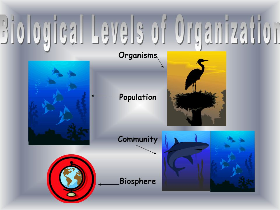 Organisms Population Community Biosphere