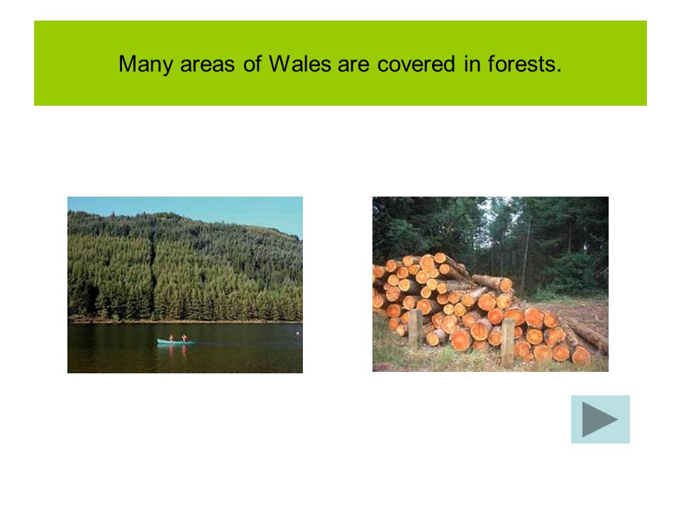 Many areas of Wales are covered in forests.