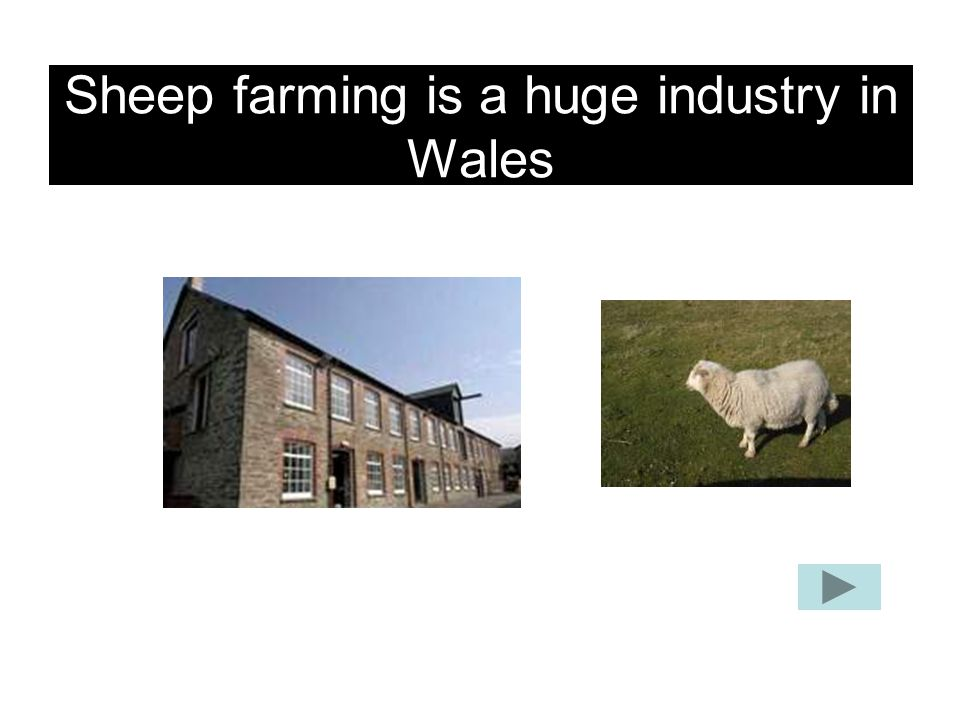 Sheep farming is a huge industry in Wales