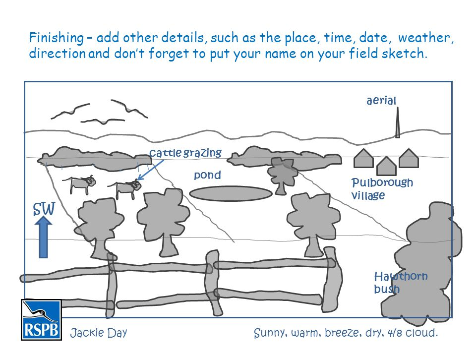 Finishing – add other details, such as the place, time, date, weather, direction and don't forget to put your name on your field sketch. cattle grazin