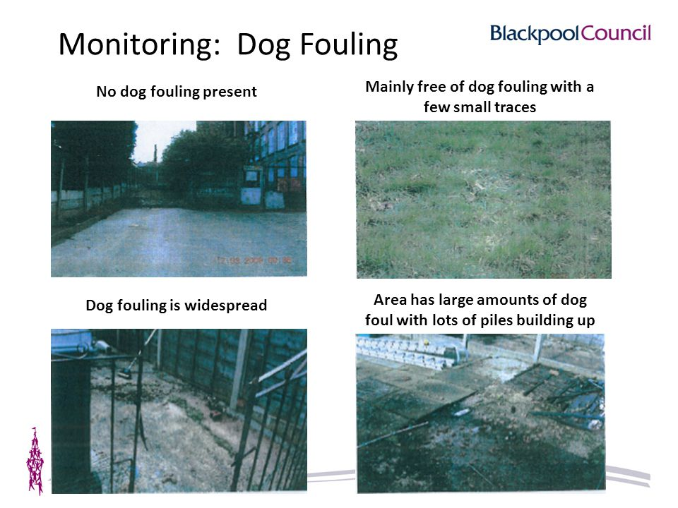 Monitoring: Dog Fouling No dog fouling present Mainly free of dog fouling with a few small traces Dog fouling is widespread Area has large amounts of dog foul with lots of piles building up
