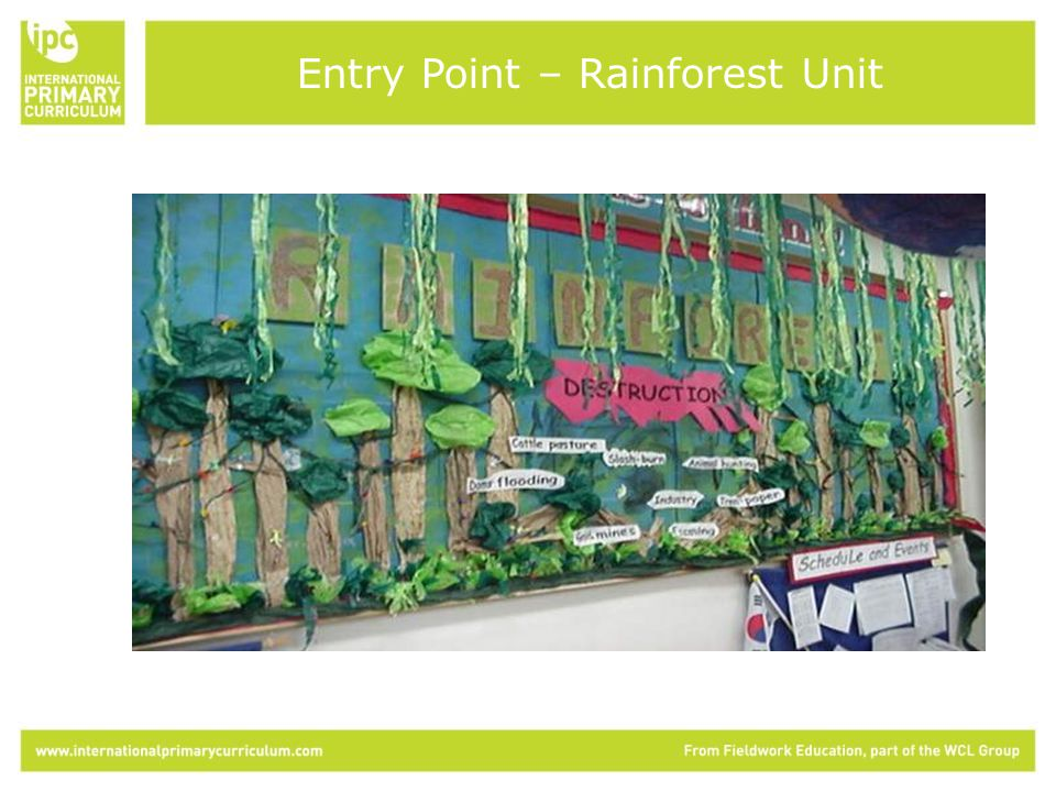 Entry Point – Rainforest Unit