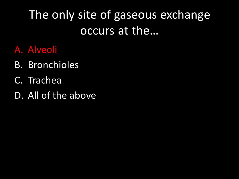 The only site of gaseous exchange occurs at the… A.Alveoli B.Bronchioles C.Trachea D.All of the above