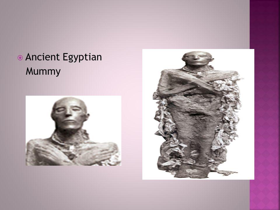  Ancient Egyptian Mummy