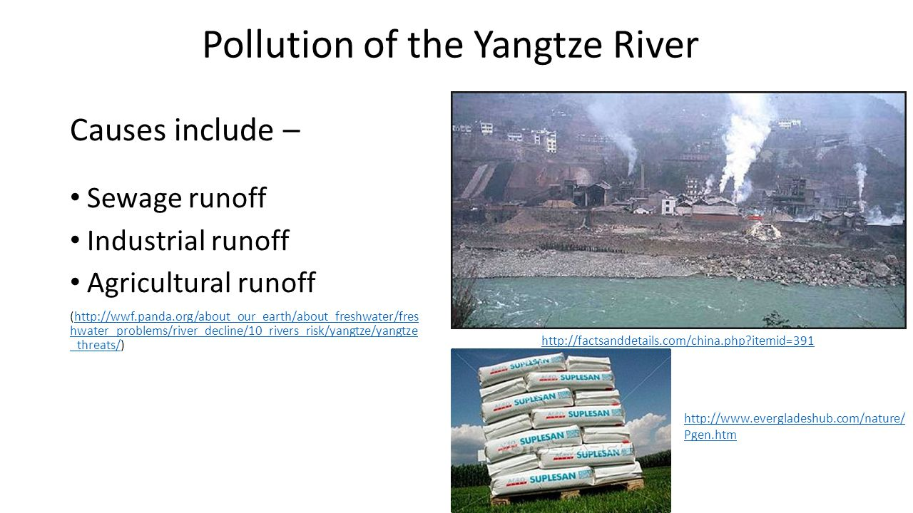 Pollution of the Yangtze River Causes include – Sewage runoff Industrial runoff Agricultural runoff (http://wwf.panda.org/about_our_earth/about_freshw