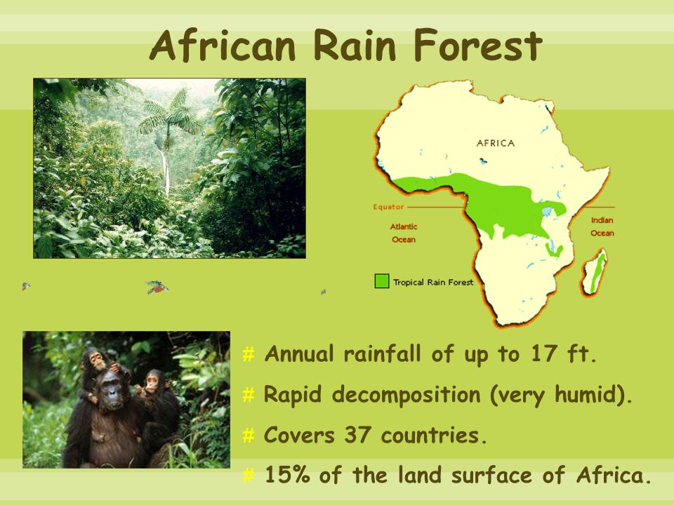 African Rain Forest # Annual rainfall of up to 17 ft.