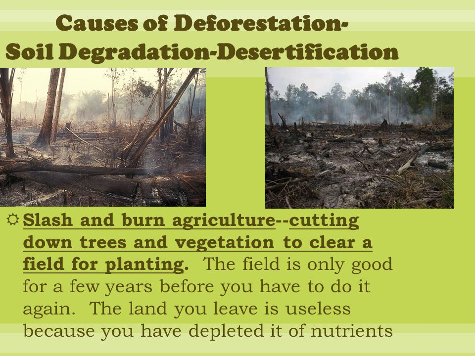  Slash and burn agriculture--cutting down trees and vegetation to clear a field for planting.