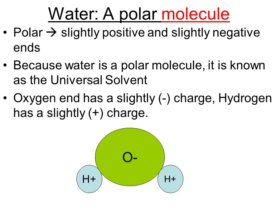 Water: A polar molecule Polar  slightly positive and slightly negative ends Because water is a polar molecule, it is known as the Universal Solvent O