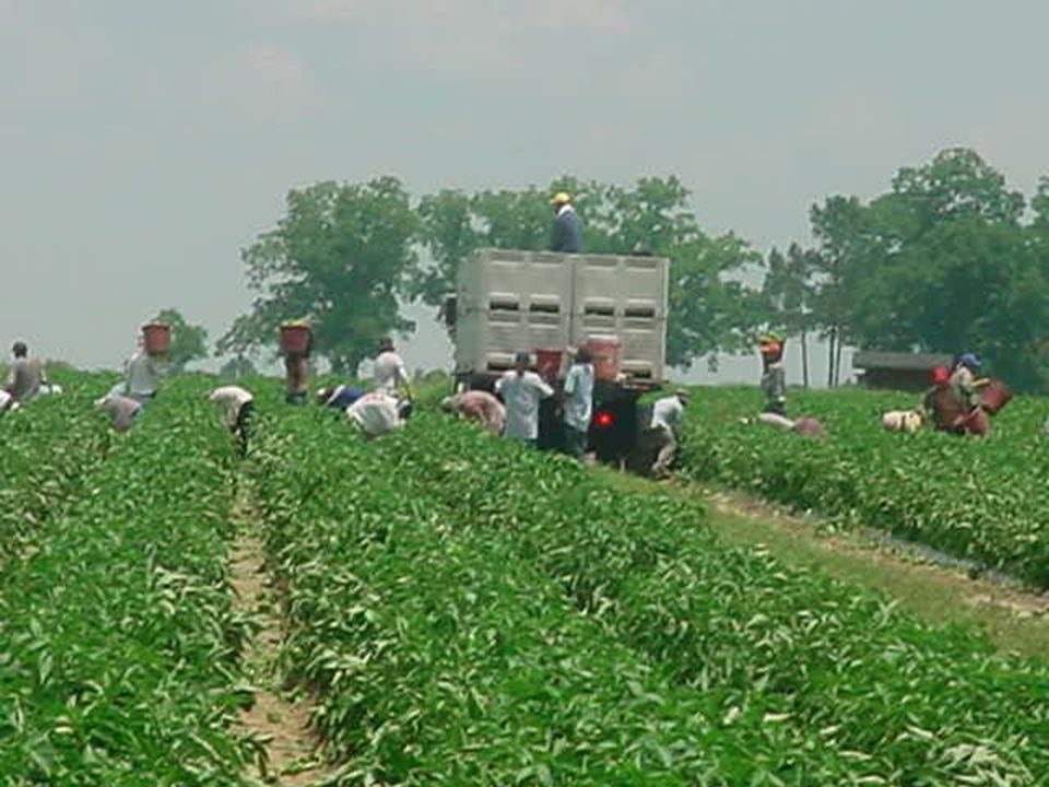 Are H-2A temporary agricultural workers eligible for the MEP.