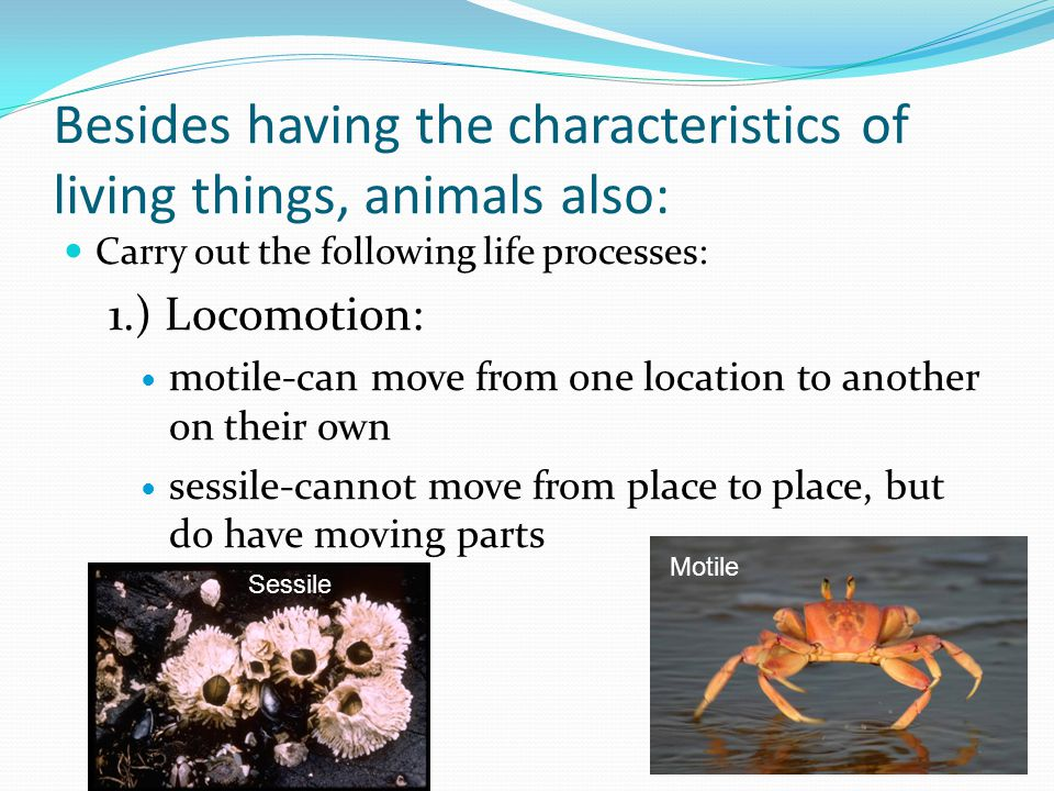 Besides having the characteristics of living things, animals also: Carry out the following life processes: 1.) Locomotion: motile-can move from one lo