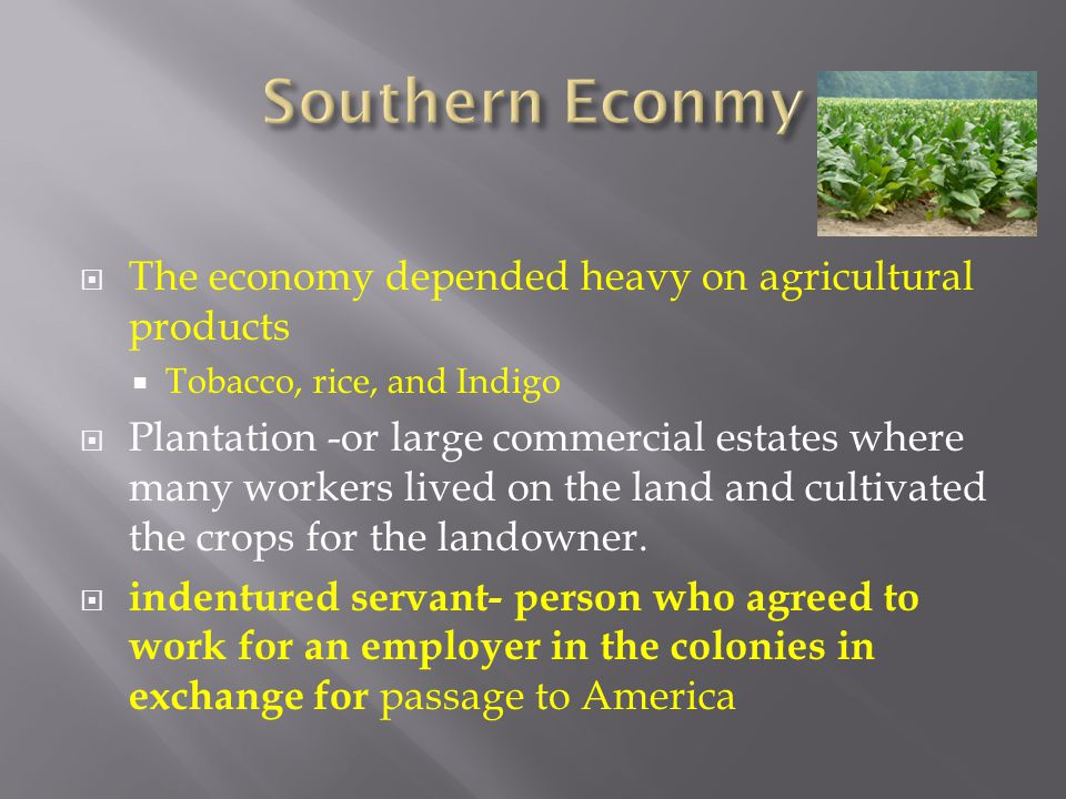  The economy depended heavy on agricultural products  Tobacco, rice, and Indigo  Plantation -or large commercial estates where many workers lived o