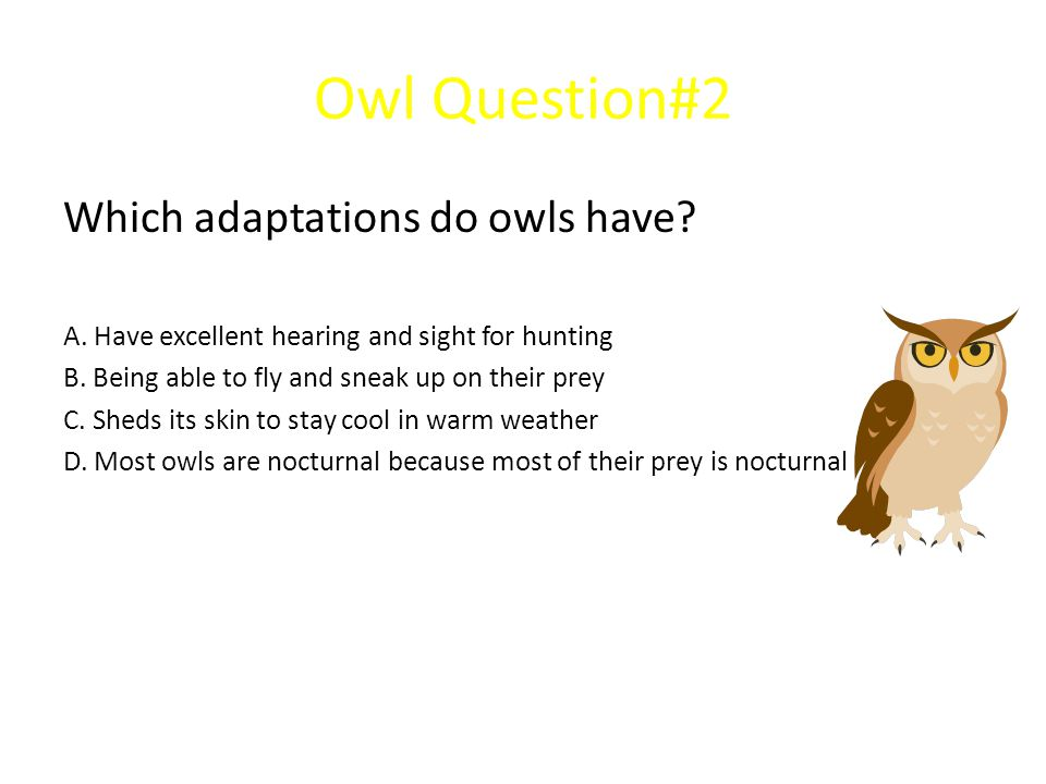 Owl Question#2 Which adaptations do owls have? A. Have excellent hearing and sight for hunting B. Being able to fly and sneak up on their prey C. Shed