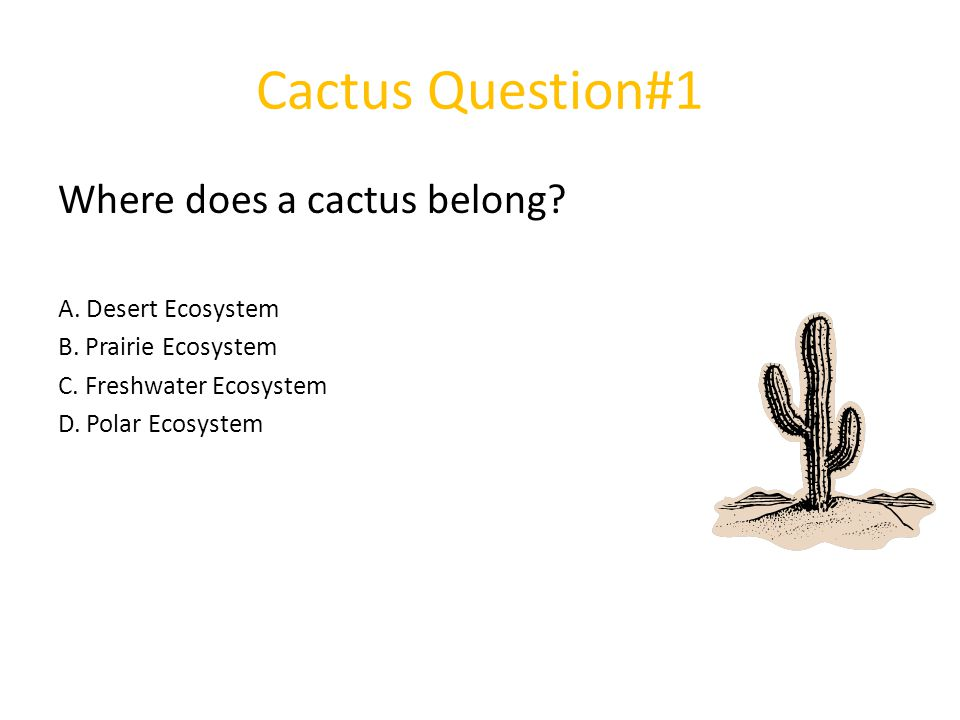 Cactus Question#1 Where does a cactus belong? A. Desert Ecosystem B. Prairie Ecosystem C. Freshwater Ecosystem D. Polar Ecosystem