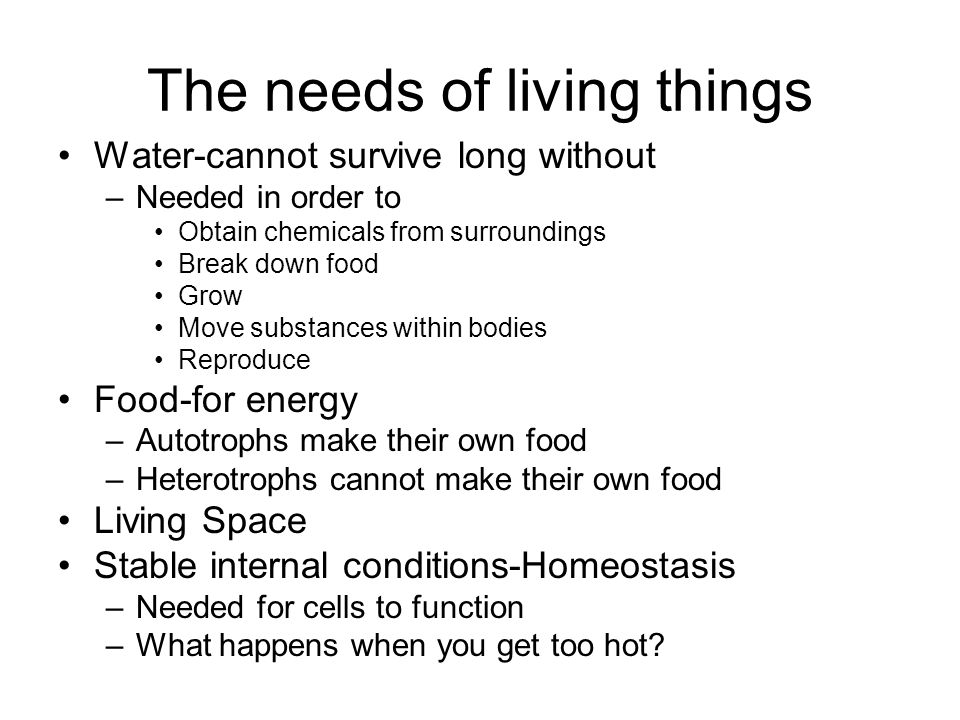 The needs of living things Water-cannot survive long without –Needed in order to Obtain chemicals from surroundings Break down food Grow Move substanc
