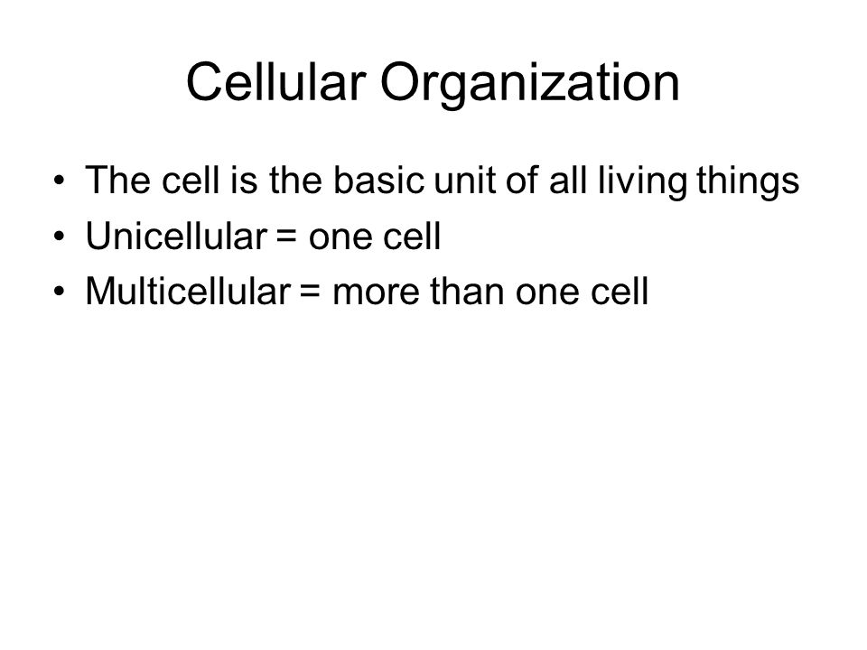 Cellular Organization The cell is the basic unit of all living things Unicellular = one cell Multicellular = more than one cell