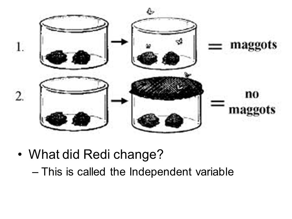 What did Redi change? –This is called the Independent variable