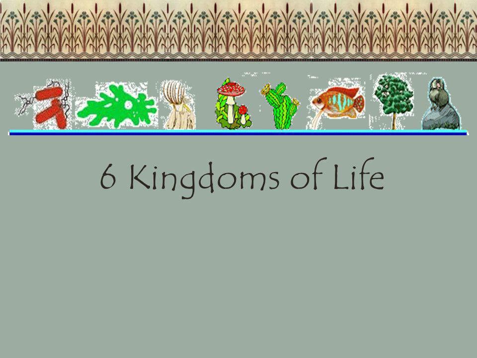 Animalia Kingdom All animals are: -Multicellular: cells lacking a cell wall -Heterotrophs -Capable of movement at some point in their lives.