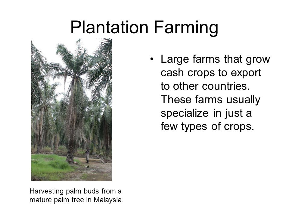 Plantation Farming Large farms that grow cash crops to export to other countries. These farms usually specialize in just a few types of crops. Harvest