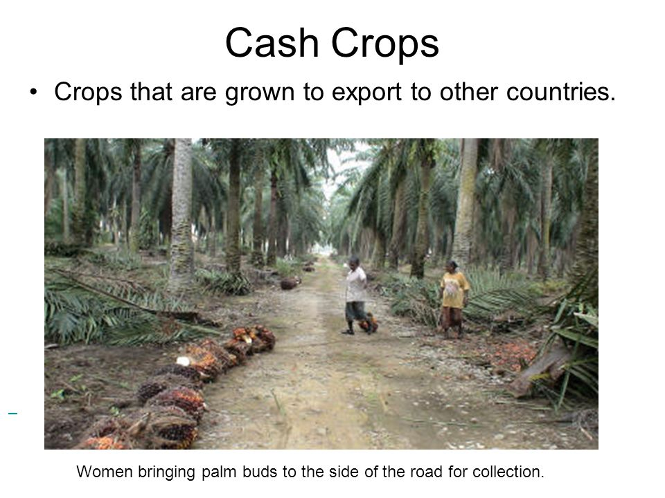 Cash Crops Crops that are grown to export to other countries. Women bringing palm buds to the side of the road for collection.