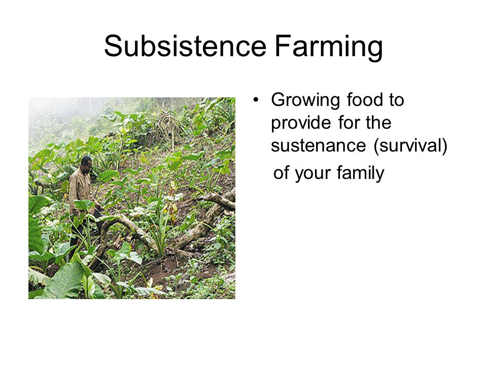 Subsistence Farming Growing food to provide for the sustenance (survival) of your family